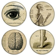 """4 x Vintage Medical 25mm 1"""" Pin Button Badges Anatomy Classic Artwork"""