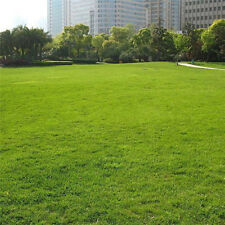 10000Pcs Tall Fescue Grün Grass Seed Festuca Arundinacea Lawn Field Turf Seeds