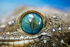 Framed Print - Dead Blue Eye of a Reptile (Picture Poster Lizard Animal Art)
