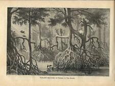 Stampa antica PANAMA la foresta pluviale 1886 Old antique print