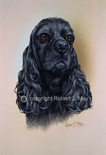 American Cocker Spaniel Print by Robert J. May