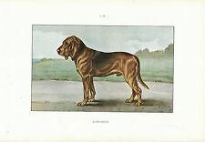 """Document Ancien - Bloodhound - Monographie de Chien de Chasse 1965 """""""