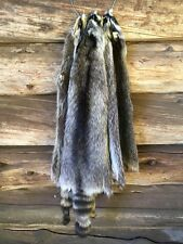Raccoon Pelt Fur Hide Skin Taxidermy log cabin decor deer antler fox coyote hunt