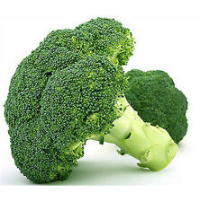 FD1880 Broccoli Seed Cauliflower Seed Green Vegetable Seeds ~1 Pack 50 Seeds ✿