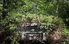 1954 Nash completely devoured by the forest except front grill 8 x 10 Photograph