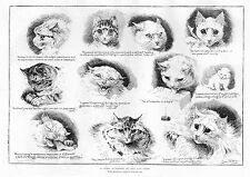 LOUIS WAIN CATS TYRO SCIENTIST AT THE CAT SHOW CLAWS EYES EARS FUR EXPRESSIONS