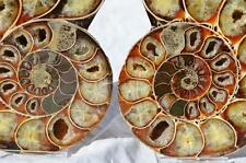 8119 Cut Split PAIR Anapuzosia Ammonite Crystal 110myo Fossil 115mm XLARGE 4.5""