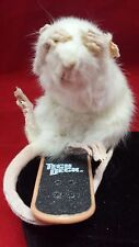 SALE*Taxidermy Rat on Skateboard!  Wheee! ///bat-mouse-mice-squirrel-bird-ermine
