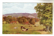 Leith Hill Ockley Green - A R Quinton Postcard *1533
