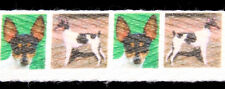 """1 Yd 1"""" Toy Fox Terrier Cotton Ribbon Trim for Collars"""