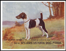SMOOTH FOX JACK RUSSELL TERRIER LOVELY VINTAGE DOG FOOD ADVERT ON PRINT POSTER