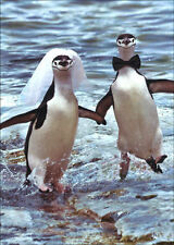 Two Penguins Running Wedding Card - Greeting Card by Avanti Press