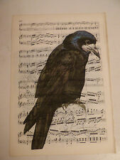 Vintage music sheet printed bird picture, wall art, antique, Rook, corvid
