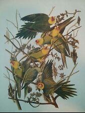 "#Vintage Lithograph Print ""Carolina Parrot"" John James Audubon. 8.5"" x 11"""