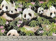Elizabeth's Studio ~ REALISTIC PANDA BEARS ~ 100% Cotton Quilt Fabric BTY