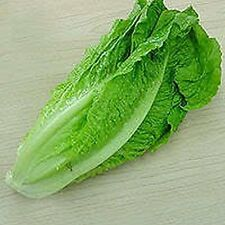 Lettuce- Romaine- Parris Island- 100 Seeds - 50 % off sale