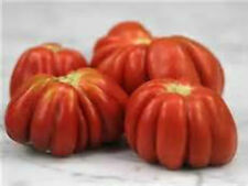 German Red Cushion Tomato! 20 Seeds! UNIQUE SHAPE!  COMB. S/H  SEE OUR STORE!