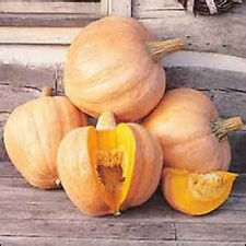 10 Seeds Amish pie Pumpkin Seeds new seed for 2016  Non-GMO  Heirloom