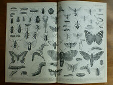 1874 ENGRAVING ENTOMOLOGY Butterflies, Weevil, MOTHS Beetles, LARVA, Saw-Fly