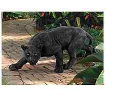 NEW Shadowed Predator Black Panther Statue Garden Decorations Ornaments Gargoyle