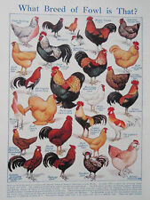 Razas De Gallinas Antiguo Vintage Retro Impresión Pollos Gallinas Gallo Inc Gallo Claudio Etc