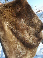 REAL BEAVER Castor Fiber FUR PELT LARGE SKIN TAXIDERMY