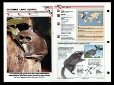 """SOUTHERN FLYING SQUIRREL"" WILD LIFE FACT FILE ANIMAL CARD/HOME SCHOOL STUDY"
