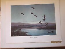 "Mallards Jumping Print by Peter Scott 17.25"" x 13.50"""