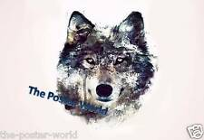 Beautiful Wolf Wild Nature Animals Wildlife Picture Poster Home Art Print New
