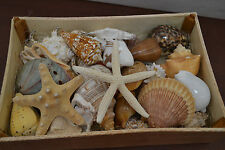 25 PCS ASSORT MIX SEA SHELL WITH STARFISH WOOD BOX BEACH WEDDING DECOR