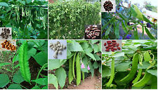 Rare 6 in 1 Beans Seed Kit with Hybrid and Rare Organic Species 6 seeds each