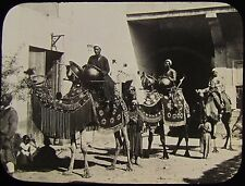 Glass Magic Lantern Slide CAMEL PROCESSION C1900 PHOTO POSSIBLY TANGIER ?
