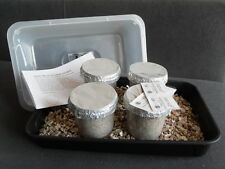 Magic farm's oyster mushroom growing kit - 4x  grow pots (large size)