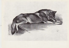 1978 VERY RARE Wolf by Vatagin old Russian Soviet postcard