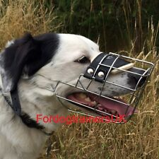 Border Collie Muzzle UK New | Best Dog Muzzle for Border Collie for Sale UK