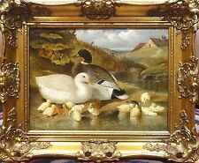 Fine 19th Century Ducks & Duckling Riverbank Antique Oil Painting John F HERRING