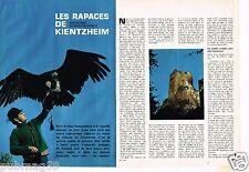 Coupure de Presse Clipping 1970 (4 pages) Les Rapaces de Kientzheim