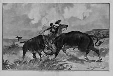 COWBOYS CATTLE DRIVE HORSES SADDLE REINS WHIP BULL FIGHT ON THE PLAINS CATTLE