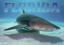 Lemon Shark, Florida, Fish Swimming in the Ocean, Jaws Star --- Animal Postcard
