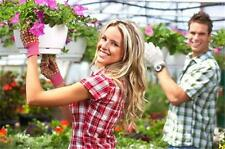Business Plan: Greenhouse Garden Plant Landscape Supply