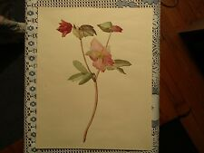 Nice Vintage unframed Botanical Floral Watercolor on Paper