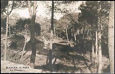 1910 - Marina di Pisa - La Pineta