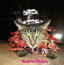 Hollywood Hustler hat for cats and Rockin' Hot Rebel party collar