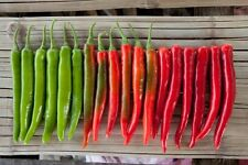 25 seed PEPPER SEED CAYENNE, HOT RED HEIRLOOM ORGANIC, NON GMO CHILLE