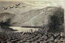 Magdalena Island CORMORANTS NESTS Strait of Magellan 1869 Bird Art Print Matted