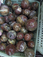 1kg Natural Polished Petrified Wood Fossil Sphere Ball Healing wholesale