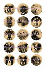 "DOG BREEDS ON NEWSPAPER 15 BOTTLE CAP IMAGES  1"" CIRCLES CUPCAKE TOP"