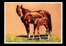 """VINTAGE 1970'S """"THE APPLE OF HER EYE"""" HORSE CALENDAR ART PRINT BY C.W. ANDERSON"""