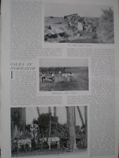 Photo article growing Colza in Normandy  France 1904  my ref R