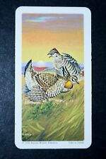 Prairie Chicken     Illustrated Card   VGC